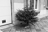 20130115 Abandoned christmas trees