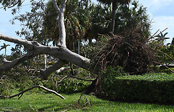 A royal poinciana tree was up ended by Hurricane Irma in Boca Raton, FL, USA along Federal Highway on Monday, September 11, 2017. Photo by Jim Rassol/Sun Sentinel/TNS/ABACAPRESS.COM