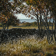 Dansande grässtrån.<br /> PHOTO © Bernt Lindgren