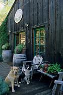 Pet dogs on patio, Maple Creek Winery Yorkville, Mendocino County, California