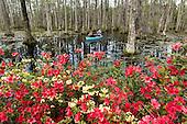 Charleston Cypress Gardens