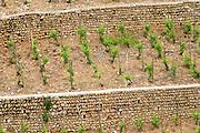 vineyard crozes hermitage rhone france