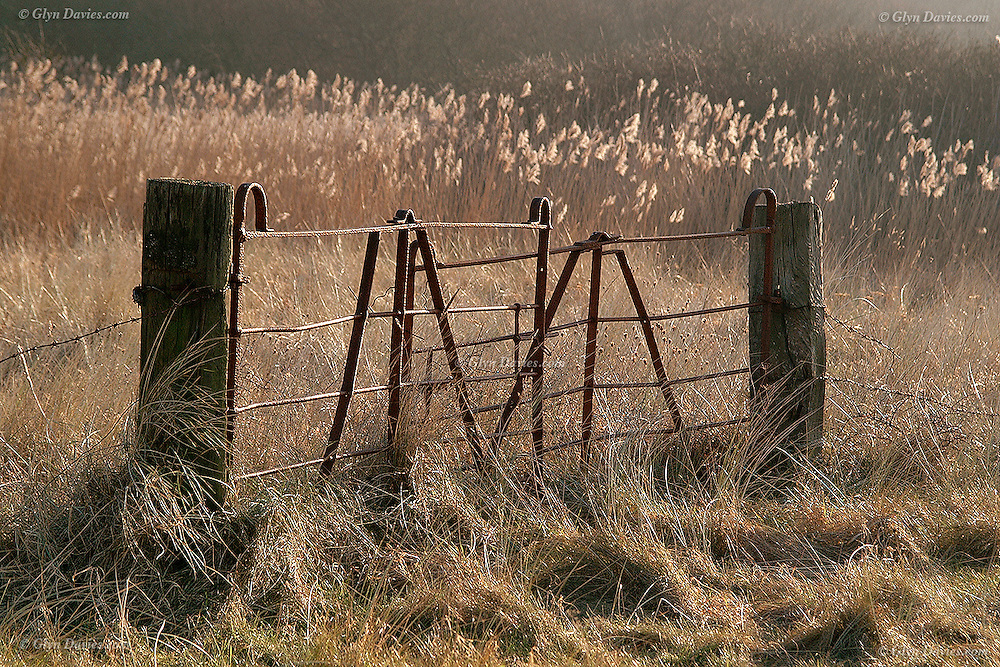 Disused gateway and rush covered fields at Llanddona, Anglesey<br /> <br /> Available as unlimited A3 & A4 prints only