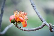 A single orange flower on a stem.