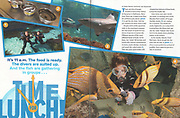 Story on National Aquarium scuba divers by Virginia editorial photographer Jeff Mauritzen for Ranger Rick Magazine.