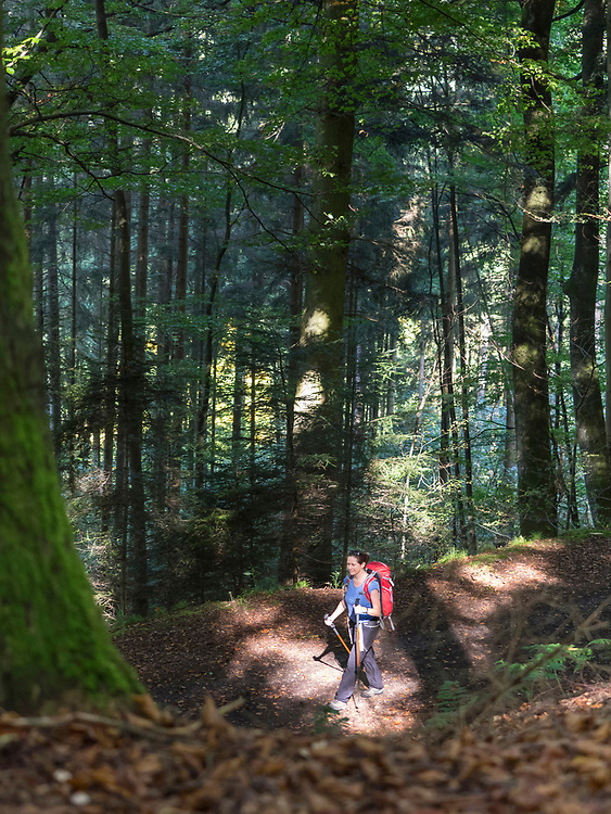 Woman on hiking tour in the Northern Black Forest, Bad Wildbad, Baden-Württemberg, Germany