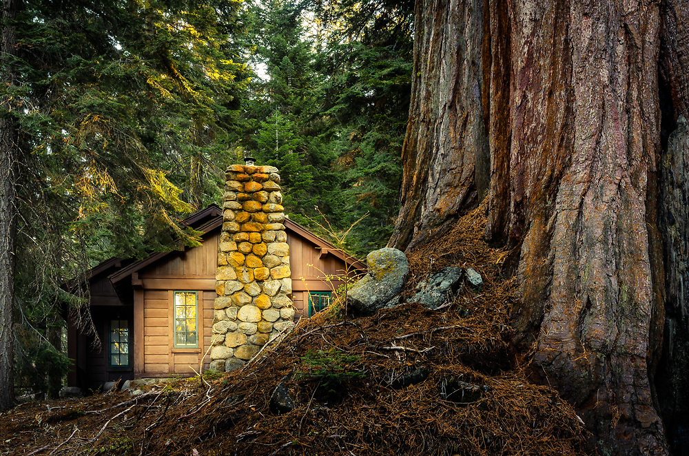 Ranger House bind the Giant Sequoia Tree in