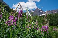 Summer wildflowers at the Maroon Bells in Aspen, Colorado.