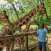 20191030 Zoo tif