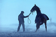 Amish youth and horse in snowstorm, Lancaster Co., PA
