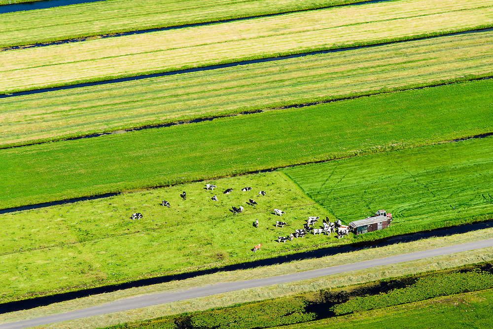 Nederland, Zuid-Holland, Gemeente Bergambacht, 10-06-2015; Polder den Hoek, Krimpenerwaard. Koeien verzamelen zich rond melktijd rond een mobiele melkstal.<br /> Cows gather around milking time around a mobile milking parlor.<br /> <br /> luchtfoto (toeslag op standard tarieven);<br /> aerial photo (additional fee required);<br /> copyright foto/photo Siebe Swart