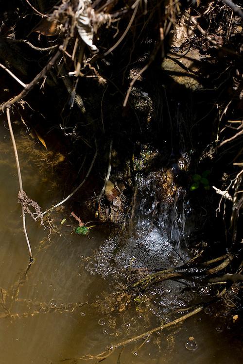 Januaria, 22 de marco de 2009..A fazenda Agroecologica Soma, se intitula uma fazenda produtora de agua. Localiza no municipio de Januaria, a 250 km de Montes Claros, usa a tecnica de Barraginhas ou Bacias de Captacao de Agua de Chuva para recuperar os lencois freaticos e consequentemente os rios da regiao. Em 2005, foram construidas mais de 300 barraginhas na regiao, e acredita-se que o volume de agua dos lencois freaticos cresceu, inclusive com a recuperacao de um rio que corta a propriedade...Na foto, detalhe de uma surgencia natural de agua no Rio Tamboril, vinda de um lencol freatico da bacia. A surgencia e um sinal do aumento do volume de agua na regiao...FOTO: BRUNO MAGALHAES / AGENCIA NITRO