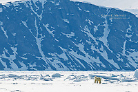 A lone polar bear poses on the sea ice in front of Baffin Island in the Canadian Arctic, Nunavut, Canada