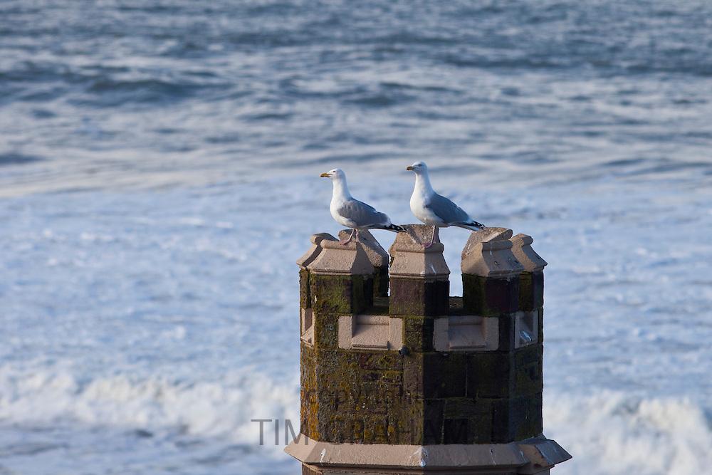 Pair of Herring Gulls, Larus argentatus, seagulls on turret overlooking the sea at Woolacombe, North Devon, UK