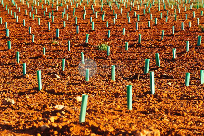 Plantación de viñedo y cereales. Corral Rubio. Albacete ©Antonio Real Hurtado / PILAR REVILLA