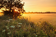 The rising sun transiently lights up a morning mist over this field between Burnham Norton and Burnham Overy Town. North Norfolk, East Anglia.