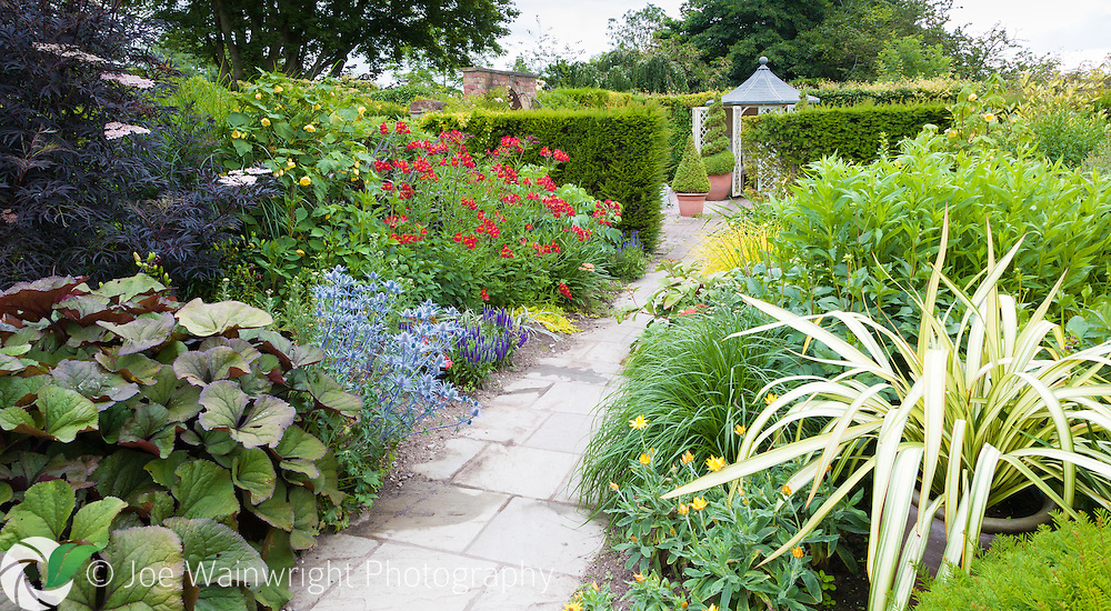 Wollerton Old Hall Garden, Shropshire, photographed in June. This image is available for sale for editorial purposes, please contact me for more information.