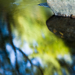 Tree reflections in the Isinglass River in Strafford, New Hampshire.