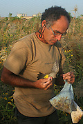 Israel, Scientist Catching birds for ringing winter November 2007