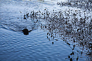 Dog returns with stick in pond.