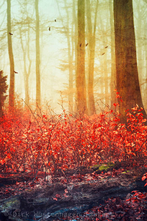 Rotten old tree trung, red fall foliage, trees in mist and ascending birds