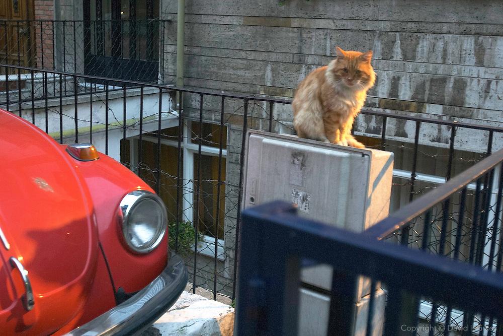 A cat suns near a VW Bug in Cihangir, Istanbul.