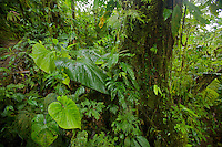 Cloud forest interior views.<br />