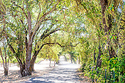 A country road in wine country, Napa-Sonoma region