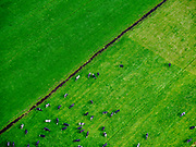 Nederland, Noord-Holland, Ankeveen, 07-05-2021; Heintejsrak- en Broekerpolder, ten Noorden van Ankeveen. Voorjaar: koeien in de wei.<br /> Heintejsrak- and Broeker polder, to the north of Ankeveen. Spring: cows in the pasture<br /> luchtfoto (toeslag op standard tarieven);<br /> aerial photo (additional fee required)<br /> copyright © 2021 foto/photo Siebe Swart