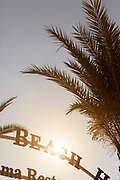 Palm trees nearby Aphrodite Beach entrance, Neo Chorio, Cyprus.