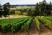 Carlton Cellars Vineyard