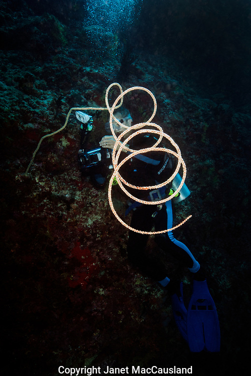 A SCUBA diver searches for small creatures on a Giant Black Coral Whip.