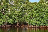 mangrove in Palawan Philippines