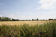 fields near Dales Lodge Farm, Barton Seagrave, Kettering, Northamptonshire.<br /> Developers wish to build 500 houses on this land which residents say is the last green space between their village and the town of Kettering.<br /> The land is owned by the Wicksteed Trust.