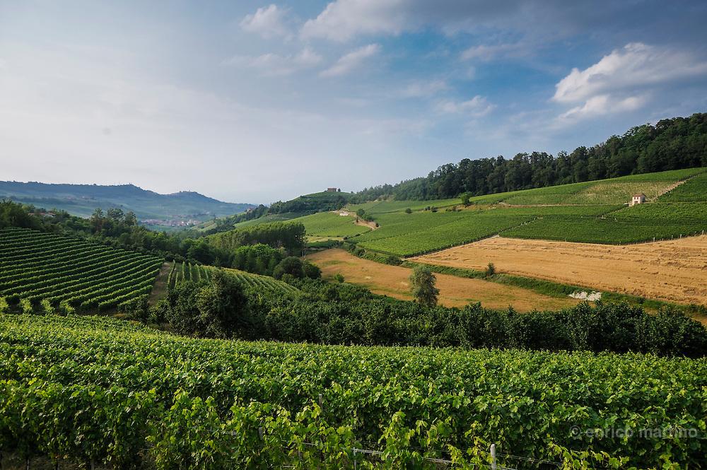 Langhe, vineyards between Monforte and Barolo.