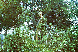 Mid to late 1970's storm damage in Central Illinois<br /> <br /> <br /> Archive slide, negative and print scans.