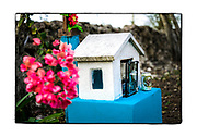 SHOT 2/21/19 5:16:54 PM - A small colorful roadside capilla with flowers in bloom and a beer offering near the small town of Panaba in the Yucatan Peninsula of Mexico. The capillas are often dedicated to certain patron saints or the memory of someone that has died at or near the site. Common throughout the backroads and secondary highways of Mexico they often contain prayer candles, pictures, personal artifacts or handwritten notes. (Photo by Marc Piscotty / © 2019)