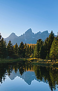 A beaver dam makes a perfectly still pond to reflect the Grand Teton one fall afternoon.