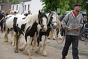 Sunday 10th June 2012 at Appleby, Cumbria, England, UK. A man leads a group of cob horses along the street at Appleby Fair, the biggest annual gathering of Gypsies and Travellers in Europe. Sunday is traditionally a busy day for horse trading and visitor attendance at the fair, which runs 7th-13th June 2012, though many people start to leave at the end of the weekend.