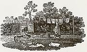 Woman pegging washing on a line. Woodcut by Thomas Bewick, 1804.