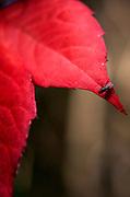 Maidenhead, Berkshire, Tuesday, 30th Sept 2014, Garden, Garden 17 Boulters Gardens, Maidenhead, Berks,  Mandatory Credit: Peter SPURRIER],