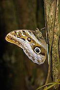 Butterflies, Moths, and Caterpillars