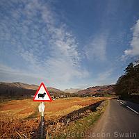 Tek Care Sheeps On't Road, Lake District, Cumbria, UK