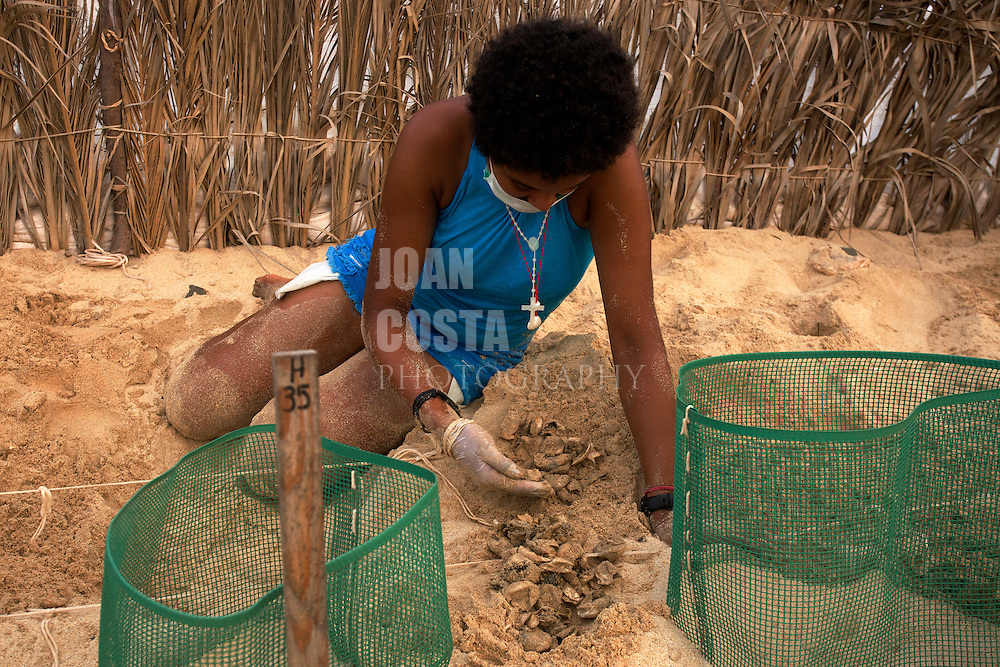 15/Septiembre/2014 Cabo Verde. Boa Vista.<br /> Jenny, monitor de la Ong Bios durante la exhumación de un nido de tortuga Carettha carettha en el vivero que tiene la organización para la preservación de los nidos.<br /> <br /> © JOAN COSTA