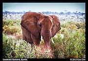 First Elephant Encounter<br /> Samburu National Reserve, Kenya<br /> September 2012
