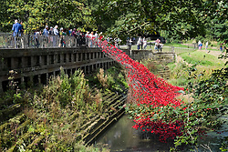 """Poppies from the Art installation """"Blood Swept Lands and Seas of Red""""  at the Tower of London are displayed at the Cascade Bridge in The Yorkshire Sculpture Park<br />  10 September 2015<br />  Image © Paul David Drabble <br />  www.pauldaviddrabble.co.uk"""