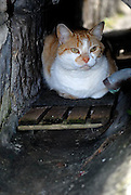 Snug on his own little padded pallet inside a drain, a local cat surveys passers-by. The Rocks, Sydney, Australia