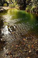 Cooper Creek, Daintree rainforest North Queensland, Australia