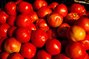 Fresh South Carolina tomatoes at an organic local produce farmers market in Marion Square in Charleston, South Carolina (photo by Charleston SC photographer Richard Ellis)