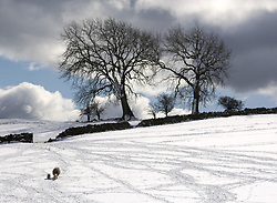 July 21, 2019 - Snowy Field, Weardale, County Durham, England (Credit Image: © John Short/Design Pics via ZUMA Wire)